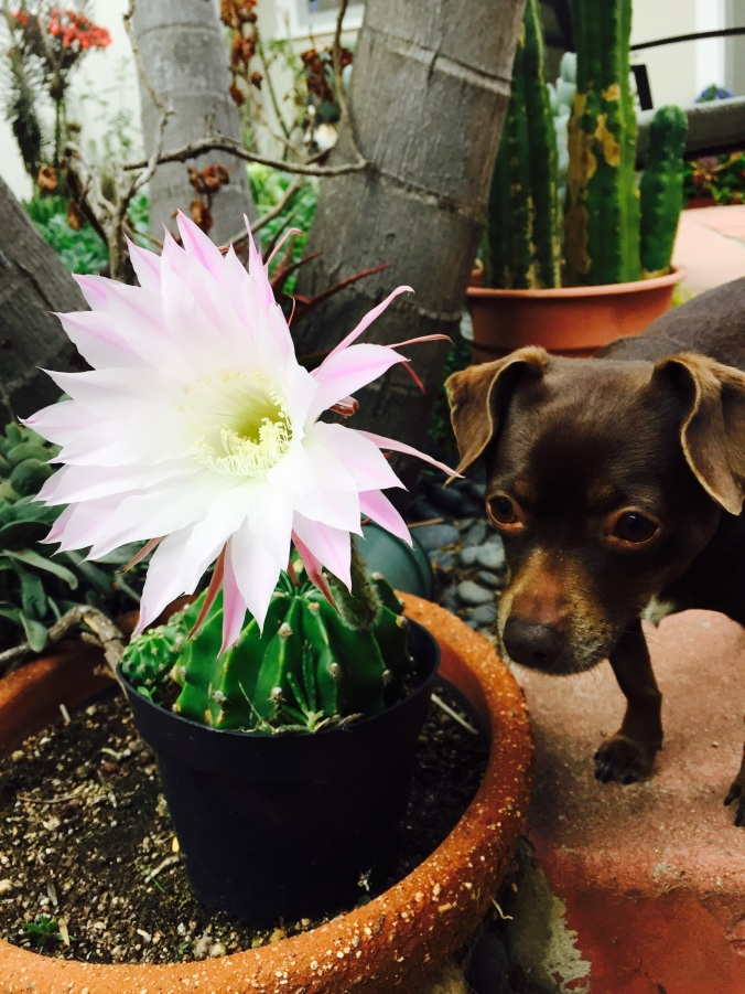Patsy and cactus flower